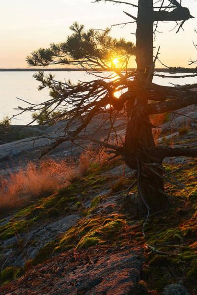 Photograph - Georgian Bay Sunrise Wild Grass by Steve Somerville