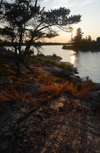 Georgian Bay Rock-wild Grass At Sunset Art Print