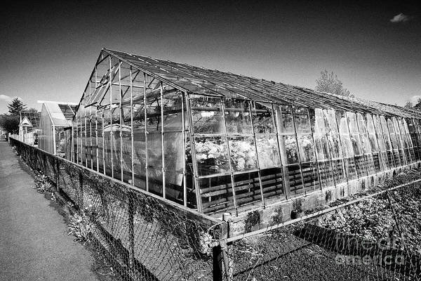 Wall Art - Photograph - geothermally powered flower greenhouses in hveragerdi Iceland by Joe Fox