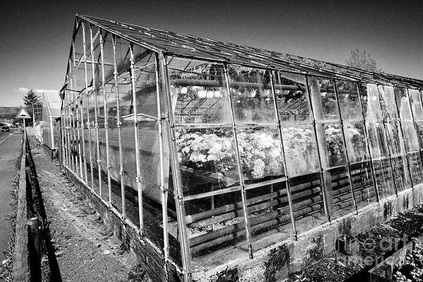 Wall Art - Photograph - geothermally powered greenhouses growing flowers in hveragerdi Iceland by Joe Fox