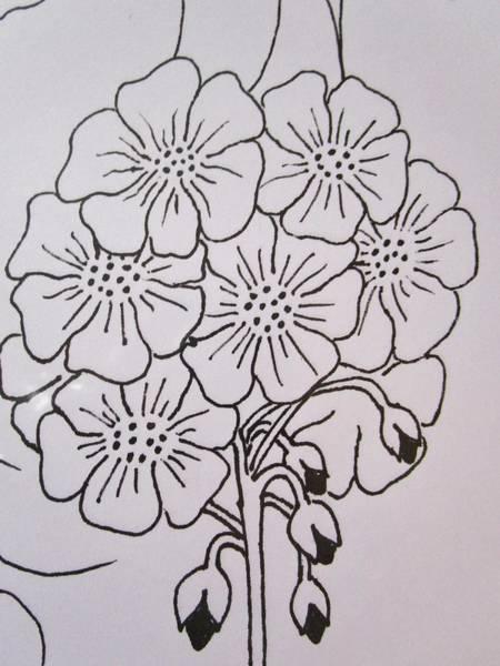 Drawing - Geranium Drops by Rosita Larsson
