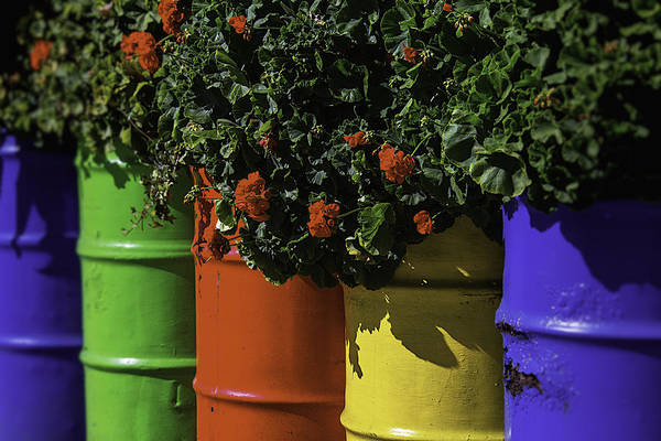 Red Geraniums Wall Art - Photograph - Geraniums In Colorful Barrels by Garry Gay