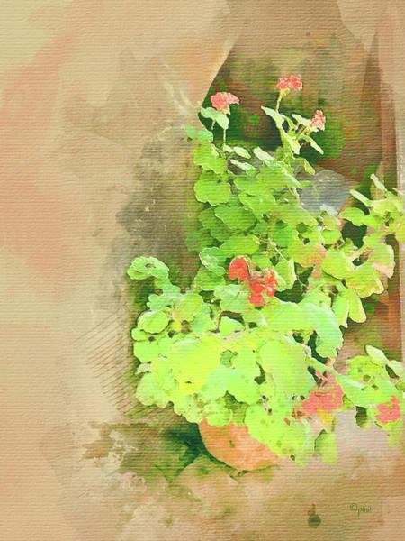 Digital Art - Geraniums - Old Salem by Paulette B Wright