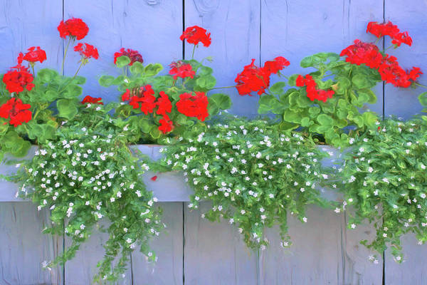 Wall Art - Photograph - Geraniums On The Fence by Nikolyn McDonald