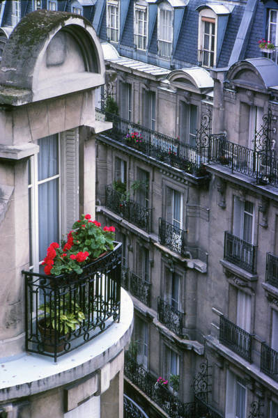 Photograph - Geraniums - Paris by Samuel M Purvis III