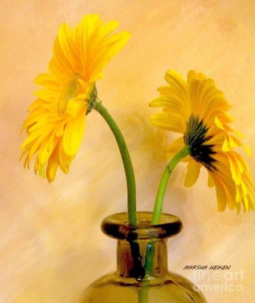 Wall Art - Photograph - Gerber Daisies Front And Back by Marsha Heiken