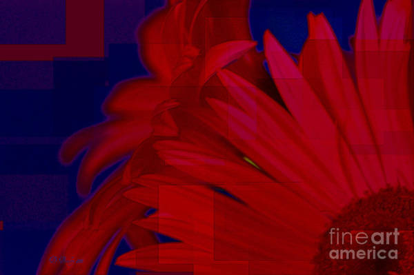 Photograph - Gerber Daisy by Donna Bentley