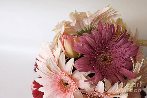 Photograph - Gerbera Bouquet by Cindy Garber Iverson