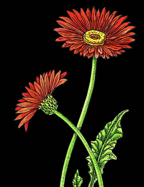 Gerbera Painting - Gerbera Daisy Flowers Watercolour by Irina Sztukowski
