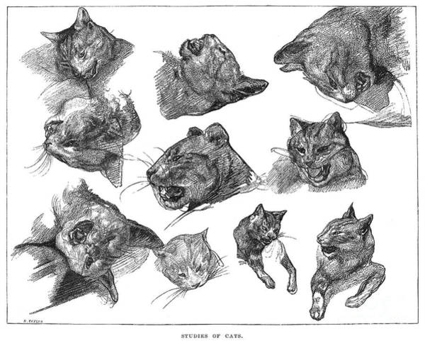 Photograph - Gericault: Cats by Granger