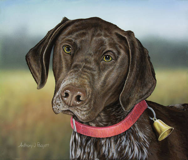 German Pointer Painting - German Chocolate by Anthony J Padgett