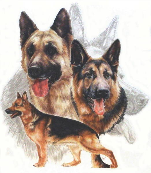 Mixed Media - German Shepherd Grouping by Barbara Keith