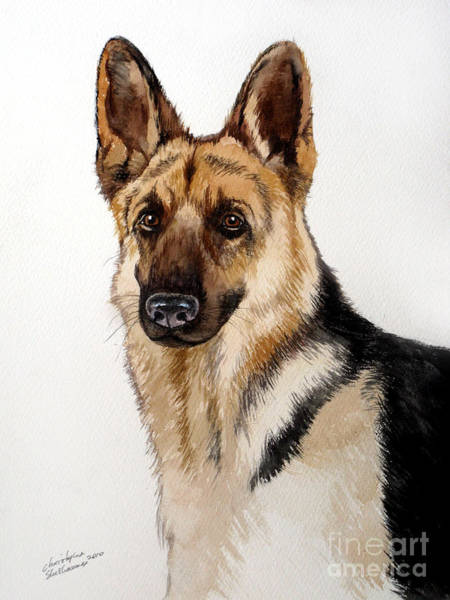Painting - German Shepherd by Christopher Shellhammer