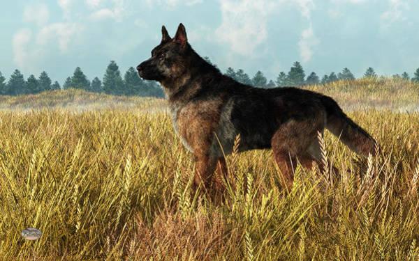 Digital Art - German Shepherd by Daniel Eskridge