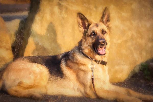 Photograph - German Shepherd by Eleanor Abramson