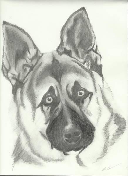 Premise Indicator Words: German Shepherd Drawings