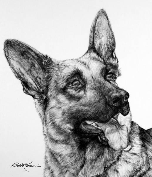 German Shepherd Drawing - German Shepherd by Roy Anthony Kaelin
