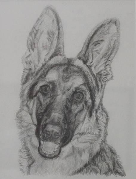 Painting - German Shepherd  by Vera Smith