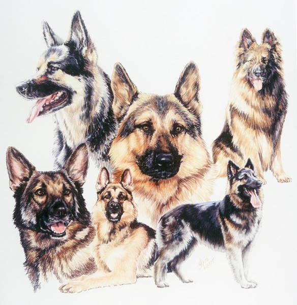 Drawing - German Shepherds by Barbara Keith