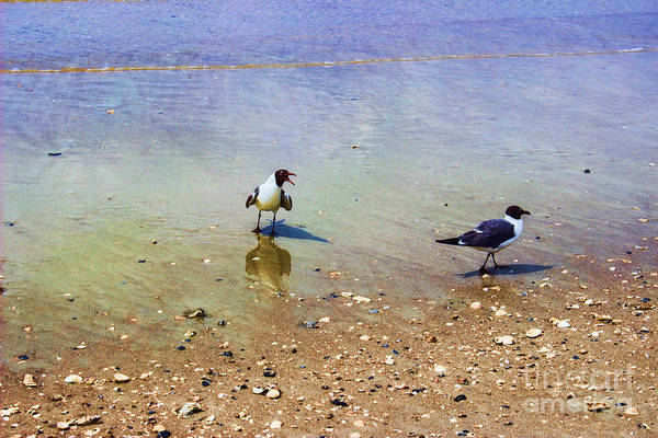 Photograph - Get Lost Seagulls by Roberta Byram