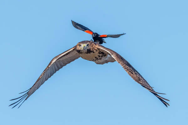 Wing Back Photograph - Get Off My Back by Morris Finkelstein