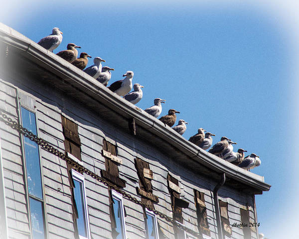 Wall Art - Photograph - Get Your Gulls In A Row by Dick Botkin