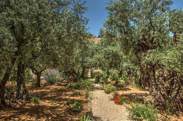 Photograph - Gethsemane Gardens 2 by Dimitry Papkov