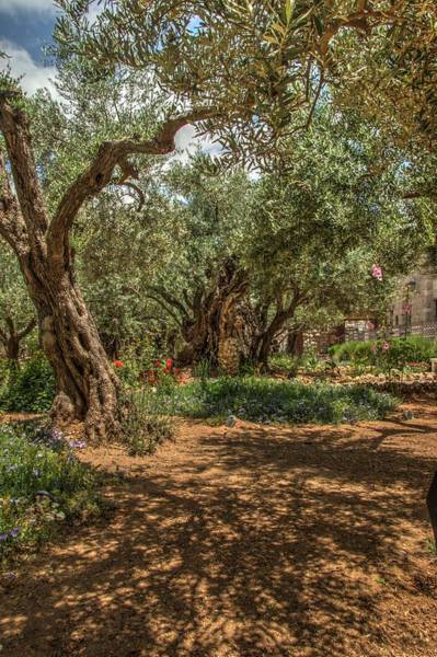 Photograph - Gethsemane Gardens 3 by Dimitry Papkov