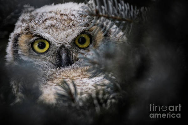Photograph - Getting A Better Look by Brad Allen Fine Art