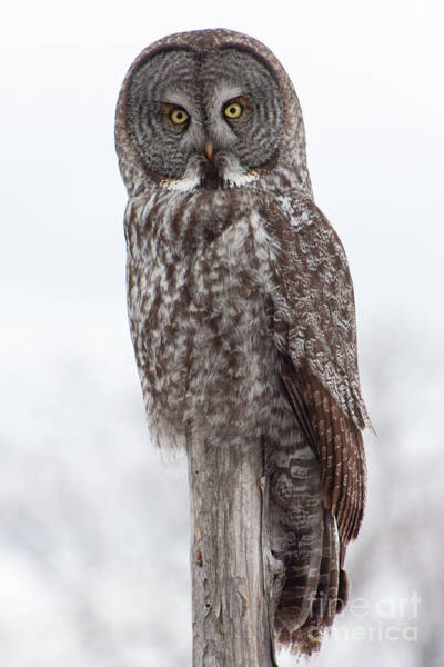 Photograph - Getting Wise by Katie LaSalle-Lowery