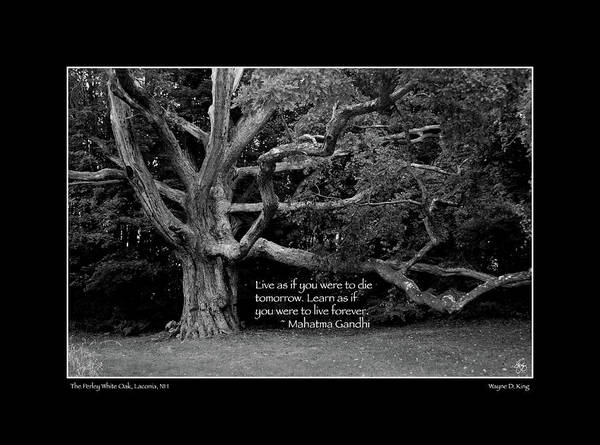 Photograph - Ghandi Quote Poster by Wayne King