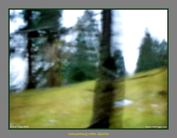 Wall Art - Photograph - Ghost Behind Tree by Jane Tripp