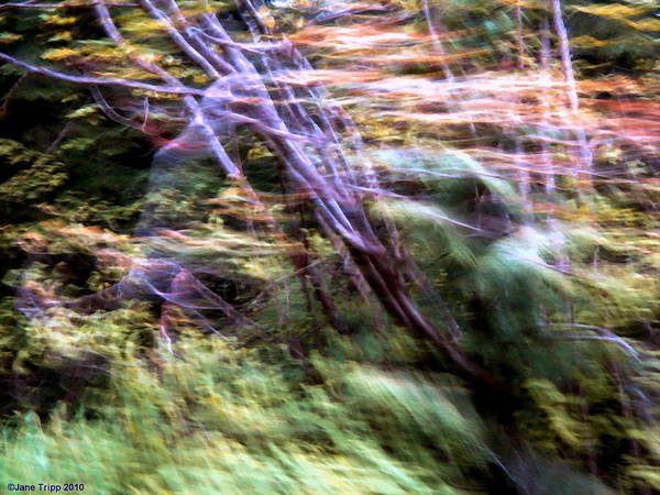 Wall Art - Photograph - Ghost By Tree  by Jane Tripp