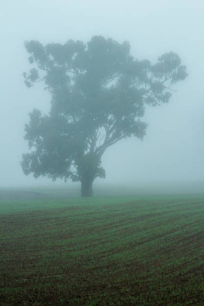 Photograph - Ghost Gum by Nicholas Blackwell