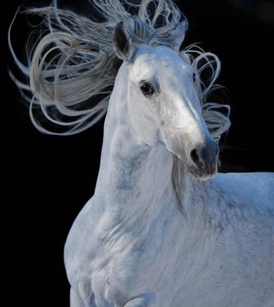 Photograph - Ghost I by Ekaterina Druz