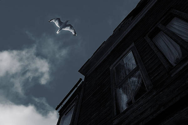 Wall Art - Photograph - Ghost In The Window by Celestial  Blue