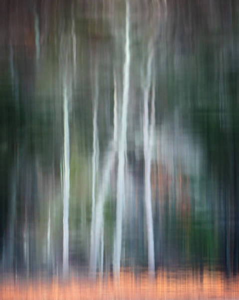 Photograph - Ghost Of The Trees by Bill Wakeley