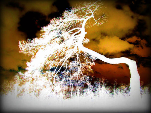 Photograph - Ghost Tree by Susie Weaver
