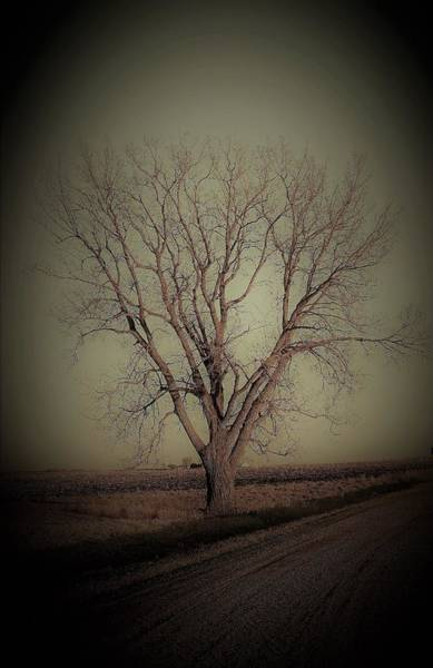 Wall Art - Photograph - Ghost Tree by Toni Grote