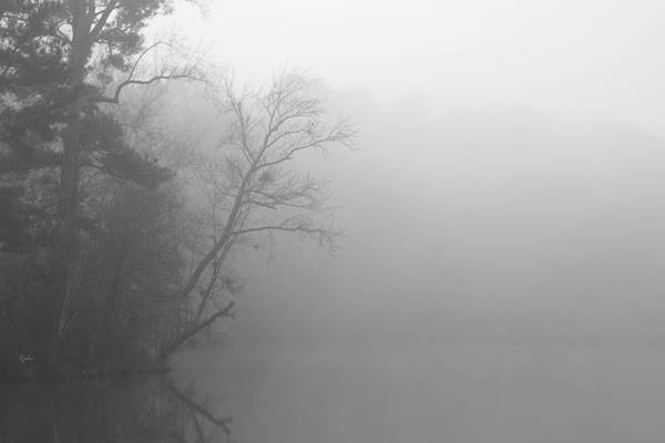 Photograph - Ghost Trees by Paulette B Wright