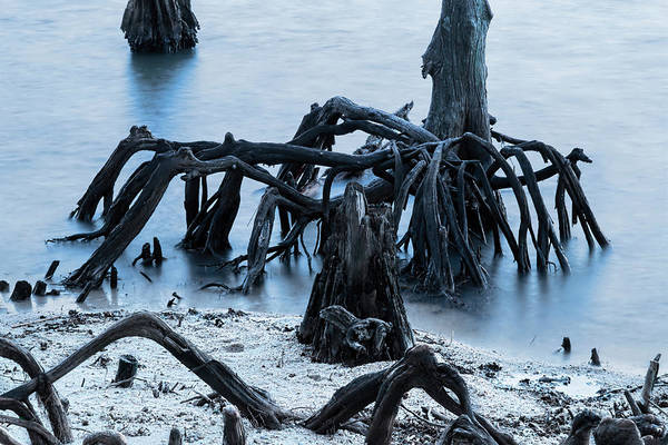 Photograph - New Orleans's Ghostly Cypress Knees In Lake Ponchartrain by Kay Brewer