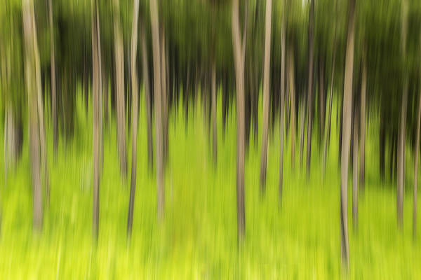 Photograph - Ghostly Forest by John Vose