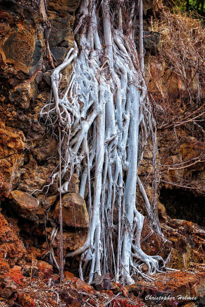 Photograph - Ghostly Roots by Christopher Holmes