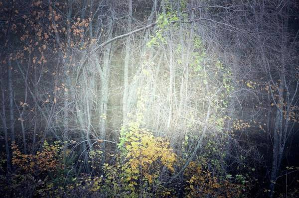 Photograph - Ghosts Of The Forest 2 by Tara Turner
