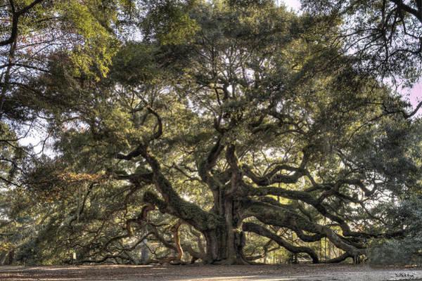 Oak Trees Photograph - Giant Angel Oak Tree Charleston Sc by Dustin K Ryan