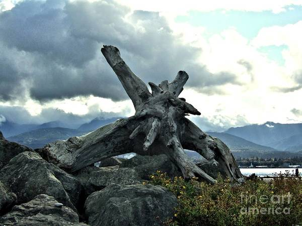 Photograph - Giant Driftwood On Jetty Rocks On A Stormy Day by Delores Malcomson