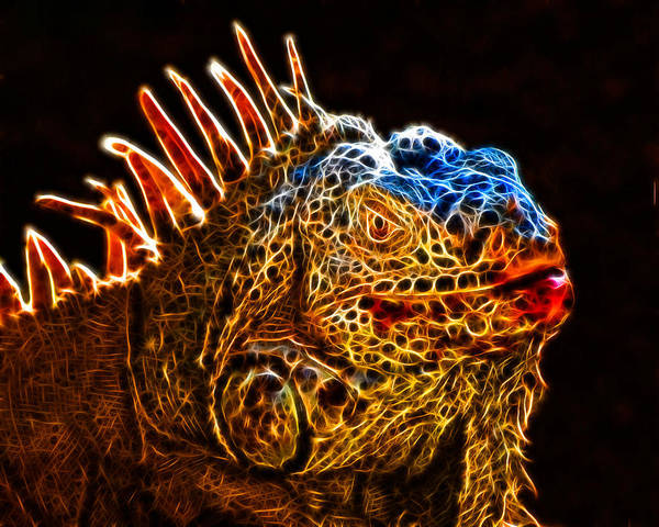 Photograph - Giant Orange Iguana Frac Filter by Ginger Wakem