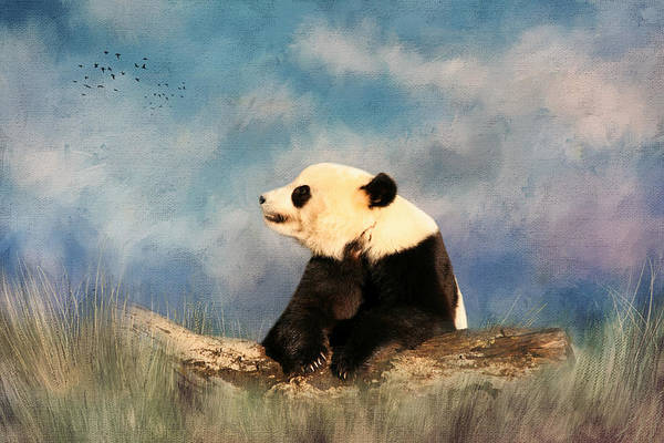 Photograph - Giant Panda by Kim Hojnacki