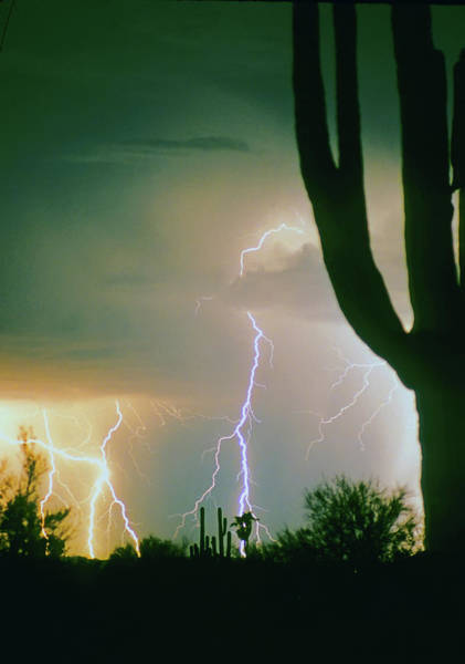 Photograph - Giant Saguaro Cactus Lightning Storm by James BO Insogna