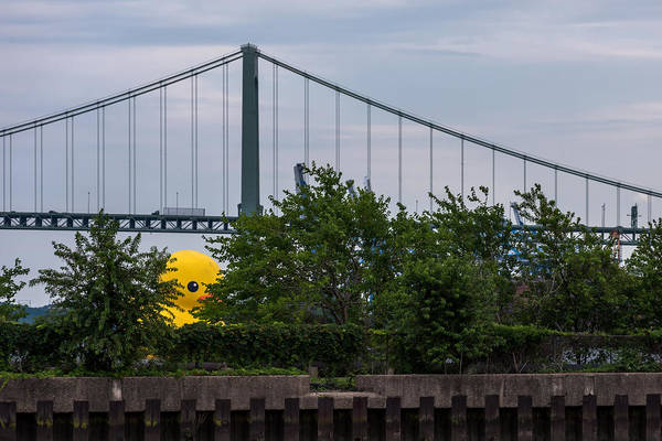 Photograph - Giant Yellow Duck Walt Whitman Bridge Philly by Terry DeLuco